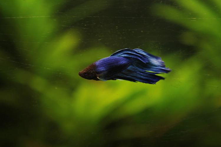 2011-10-08 prouais - aquarium