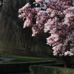 2012-03-29 nyon - magnolia