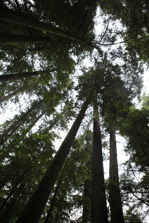 2012-07-22 vancouver island - cathedral grove