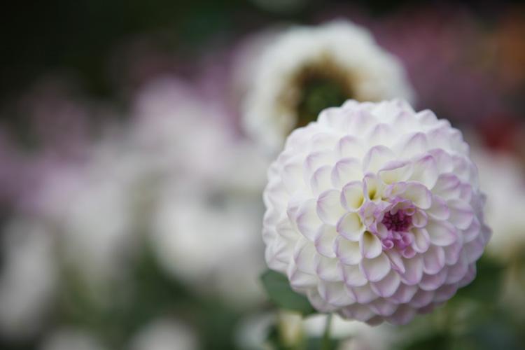 2012-10-07 paris 12e - parc floral