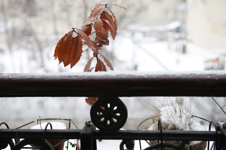 2013-01-20 dodu - fenetre