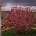 2013-04-26 marcilly - vue sdb