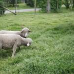 2013-05-10 mouton village