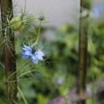 2013-06-14 marcilly - fleurs