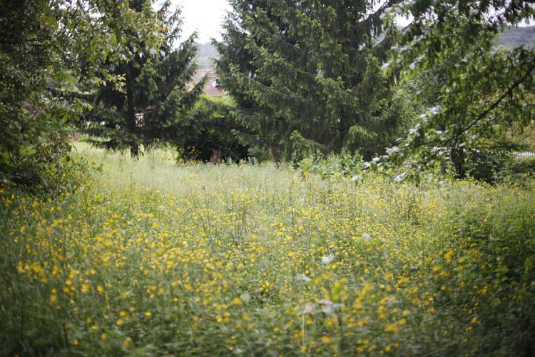 2014-05-24 marcilly - jardin