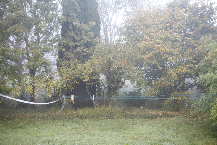 2014-10-27 marcilly - jardin