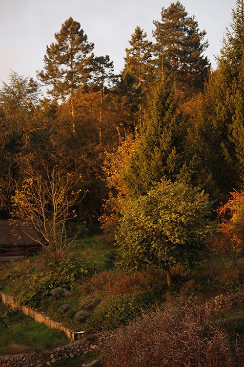 2014-11-03 marcilly - jardin