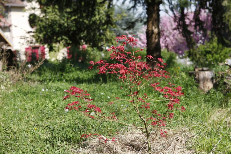 2015-04-20 marcilly jardin