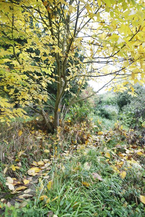 2015-10-23 jardin - noyer