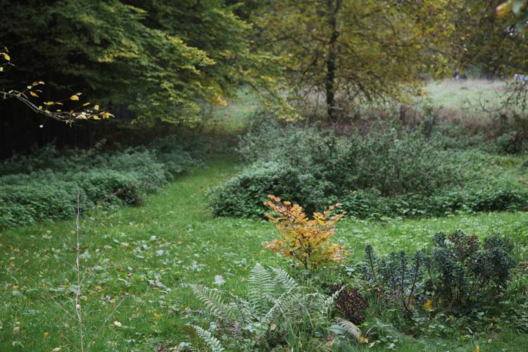 2015-10-23 jardin