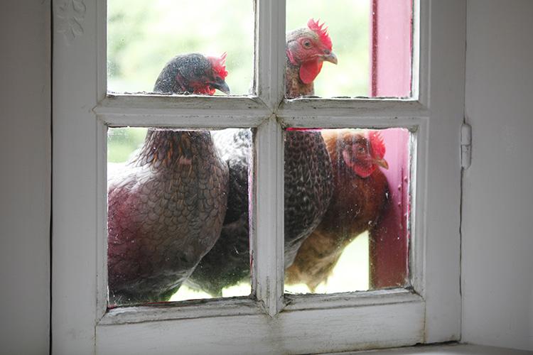 2016-06-21 poules