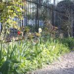 2017-04-02 jardin