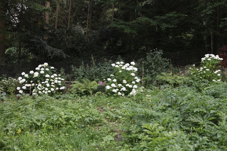 2019-06-30 jardin