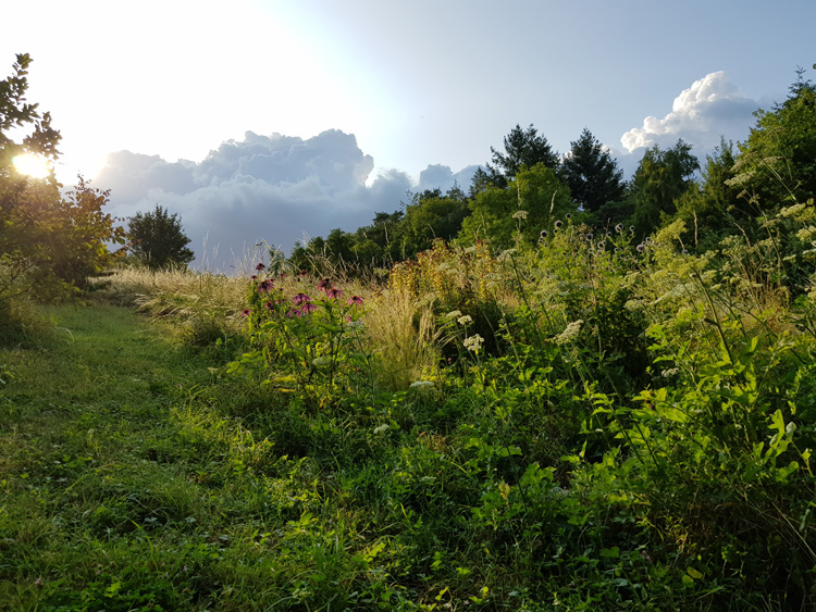 2019-07-30_jardin