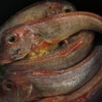 2011-06-25 dodu - grondins