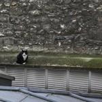 2011-07-15 dodu - chat dans la cour