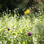 2013-05-12 marcilly - jardin