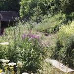 2015-07-06 marcilly jardin