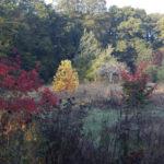 2019-10-13 jardin