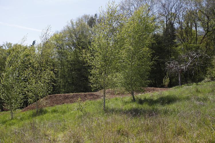 2021-04-24 jardin