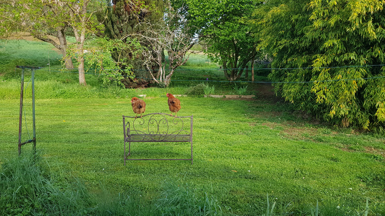 2021-05-11 jardin - poules